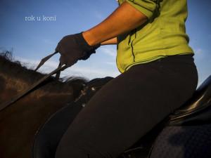 koně.001